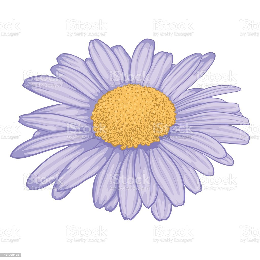 Beautiful daisy flower isolated on white background stock vector art beautiful daisy flower isolated on white background royalty free beautiful daisy flower isolated on izmirmasajfo