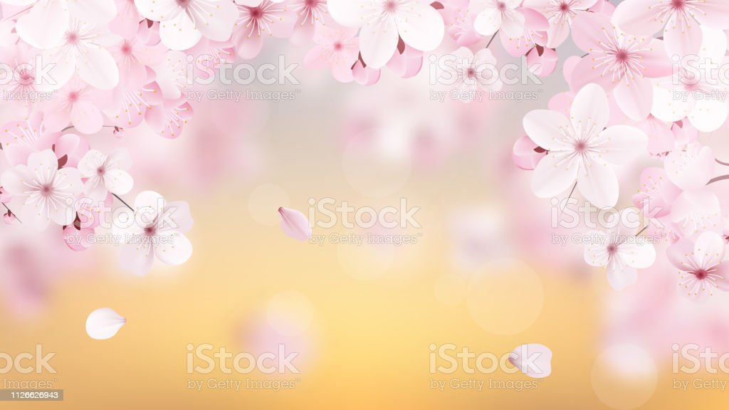 Beautiful delicate background with blossoming light pink sakura flowers with place for text. Delicate floral design. Realistic  vector illustration. royalty-free beautiful delicate background with blossoming light pink sakura flowers with place for text delicate floral design realistic vector illustration stock illustration - download image now