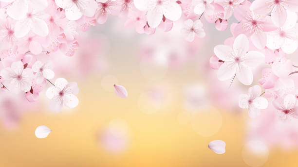 Beautiful delicate background with blossoming light pink sakura flowers with place for text. Delicate floral design. Realistic  vector illustration. vector art illustration