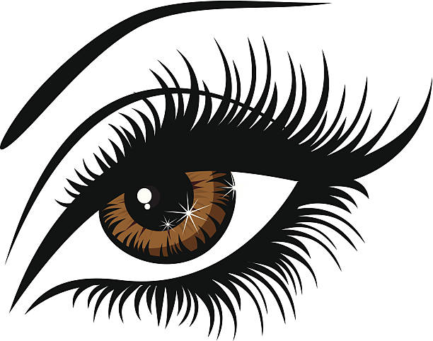 beautiful female brown eyes - 睫毛 幅插畫檔、美工圖案、卡通及圖標