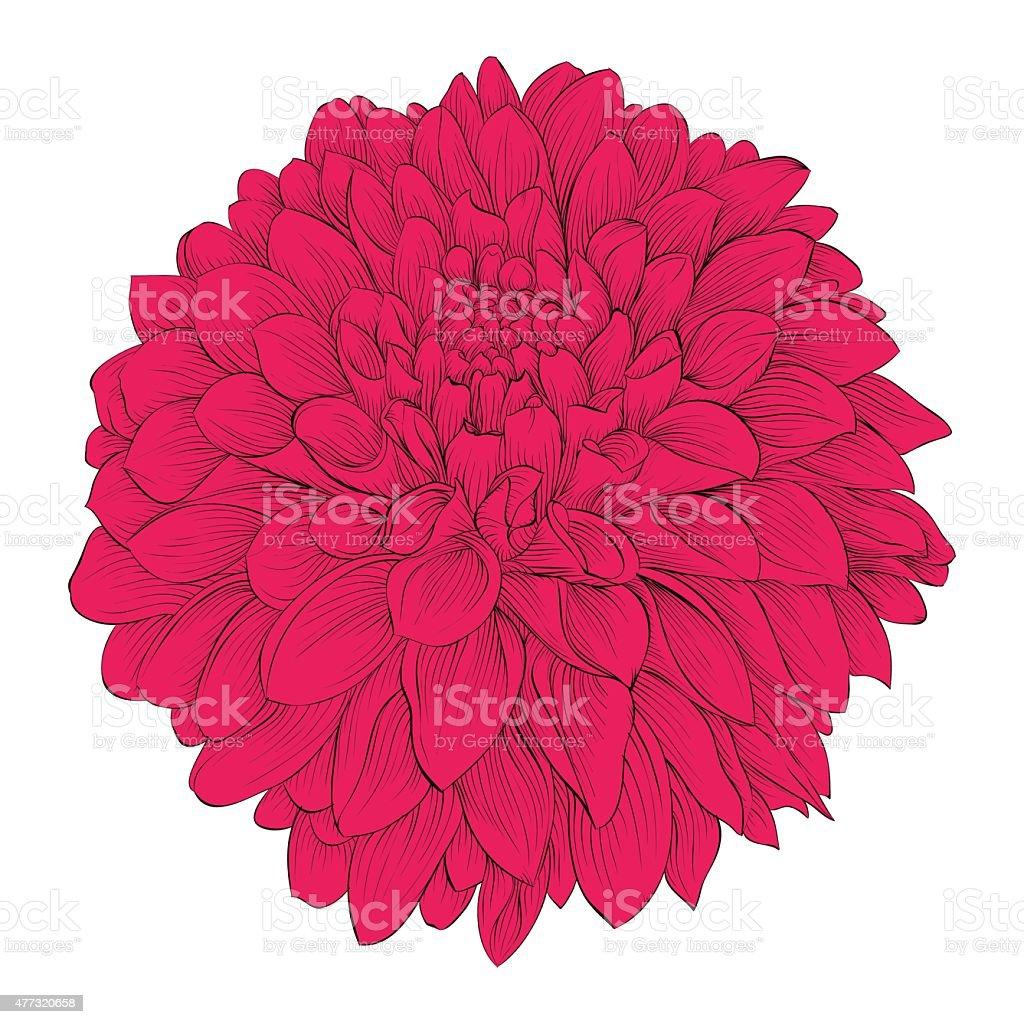 Beautiful flower dahlia isolated on white background stock vector beautiful flower dahlia isolated on white background royalty free beautiful flower dahlia isolated on izmirmasajfo