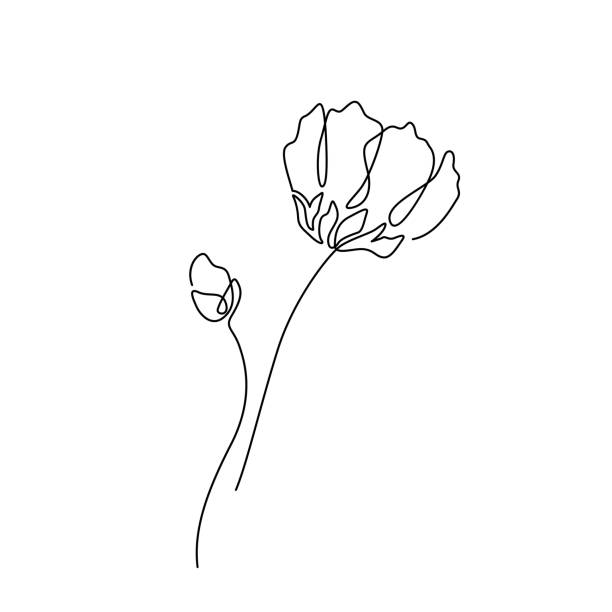 Beautiful flower in minimal line style. Modern fashion linear poppy for logo, emblem template. Vector illustration vector art illustration