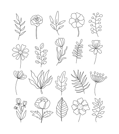 Beautiful flowers and leaves set isolated on white background. Black and white modern art. Hand drawn outline vector illustration for logo design, wedding invitation, floral cards, botanical crafts.