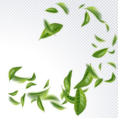 Beautiful Flying Green Tea Leaf