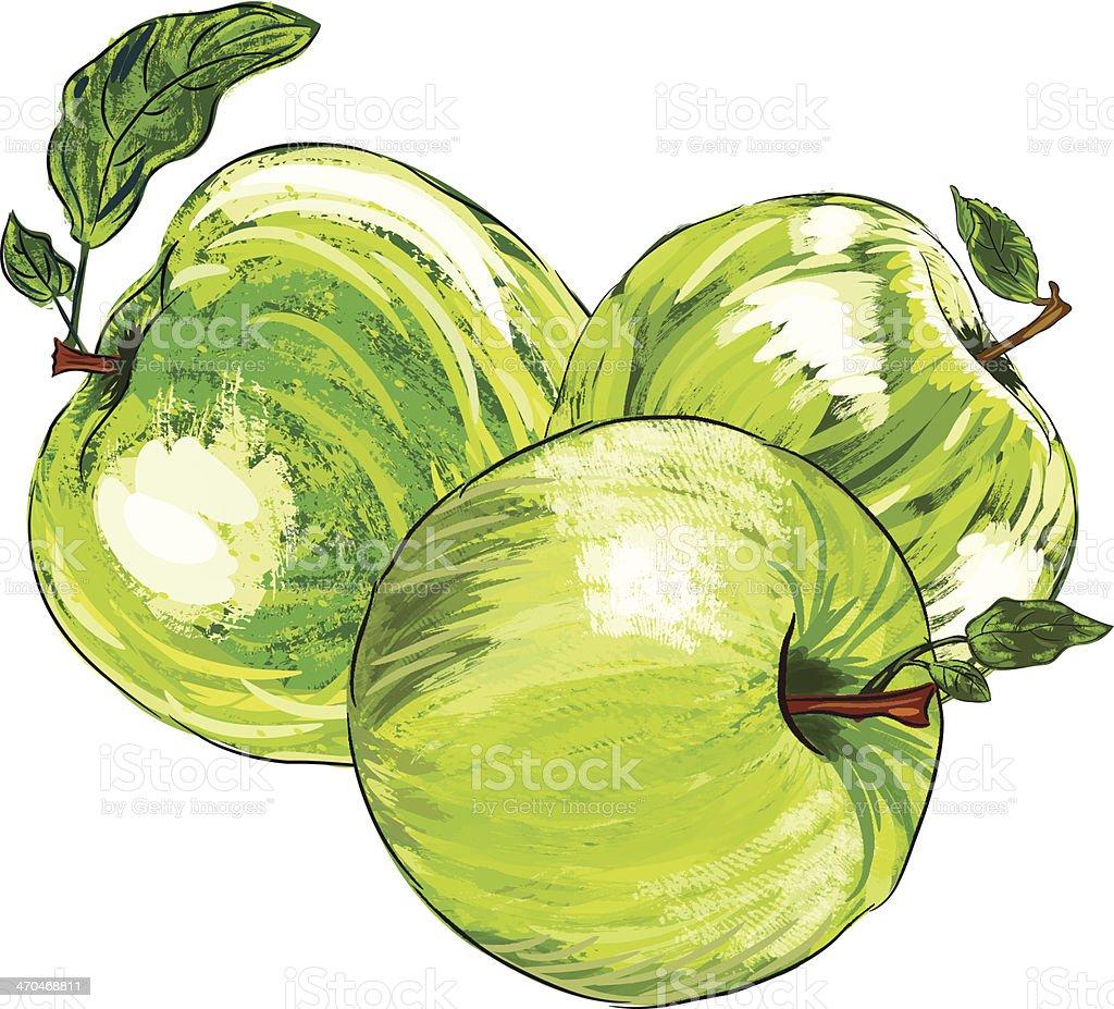 Beautiful Green Apple royalty-free beautiful green apple stock vector art & more images of apple - fruit