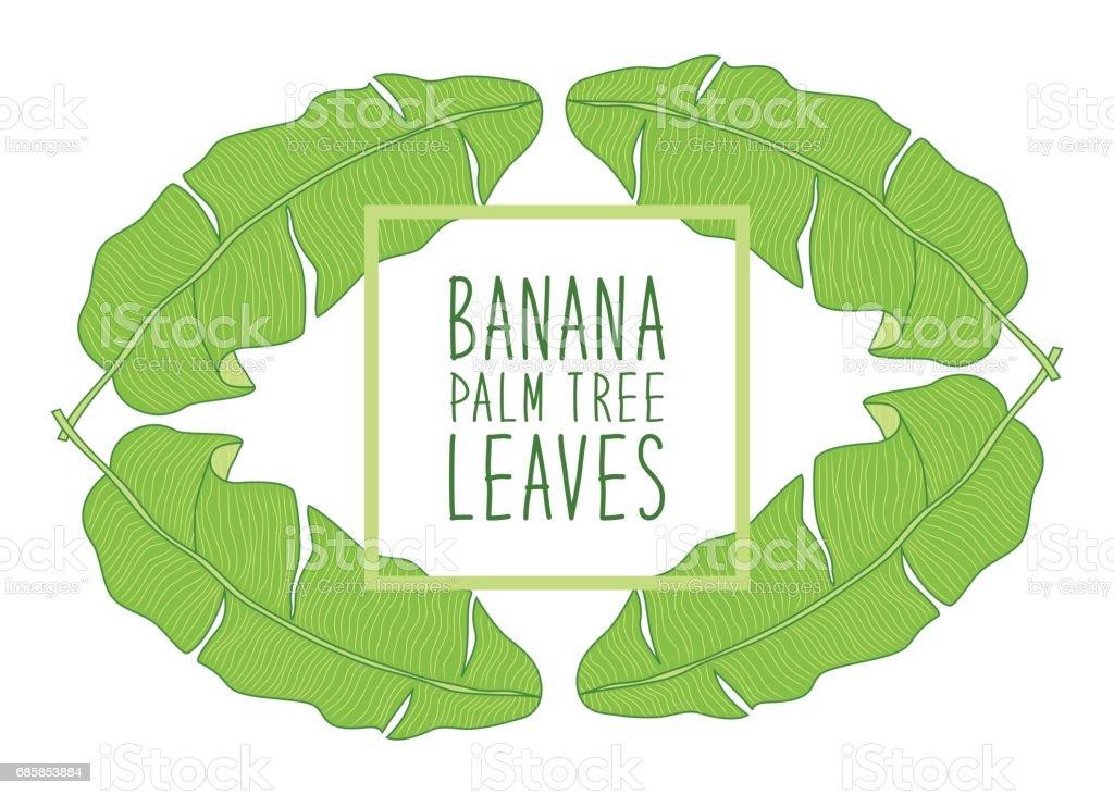 Beautiful green botanical frame with foliage as banana palm tree leaves vector art illustration
