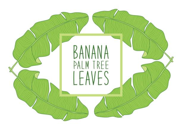Schöner grünen Botanischer Rahmen mit Laub als Banane Palme Blätter – Vektorgrafik