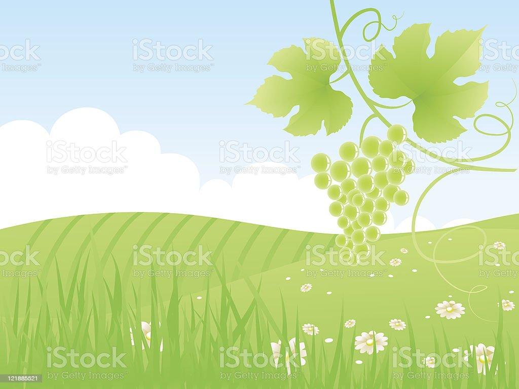 Beautiful green fields landscape with grape vine. royalty-free stock vector art