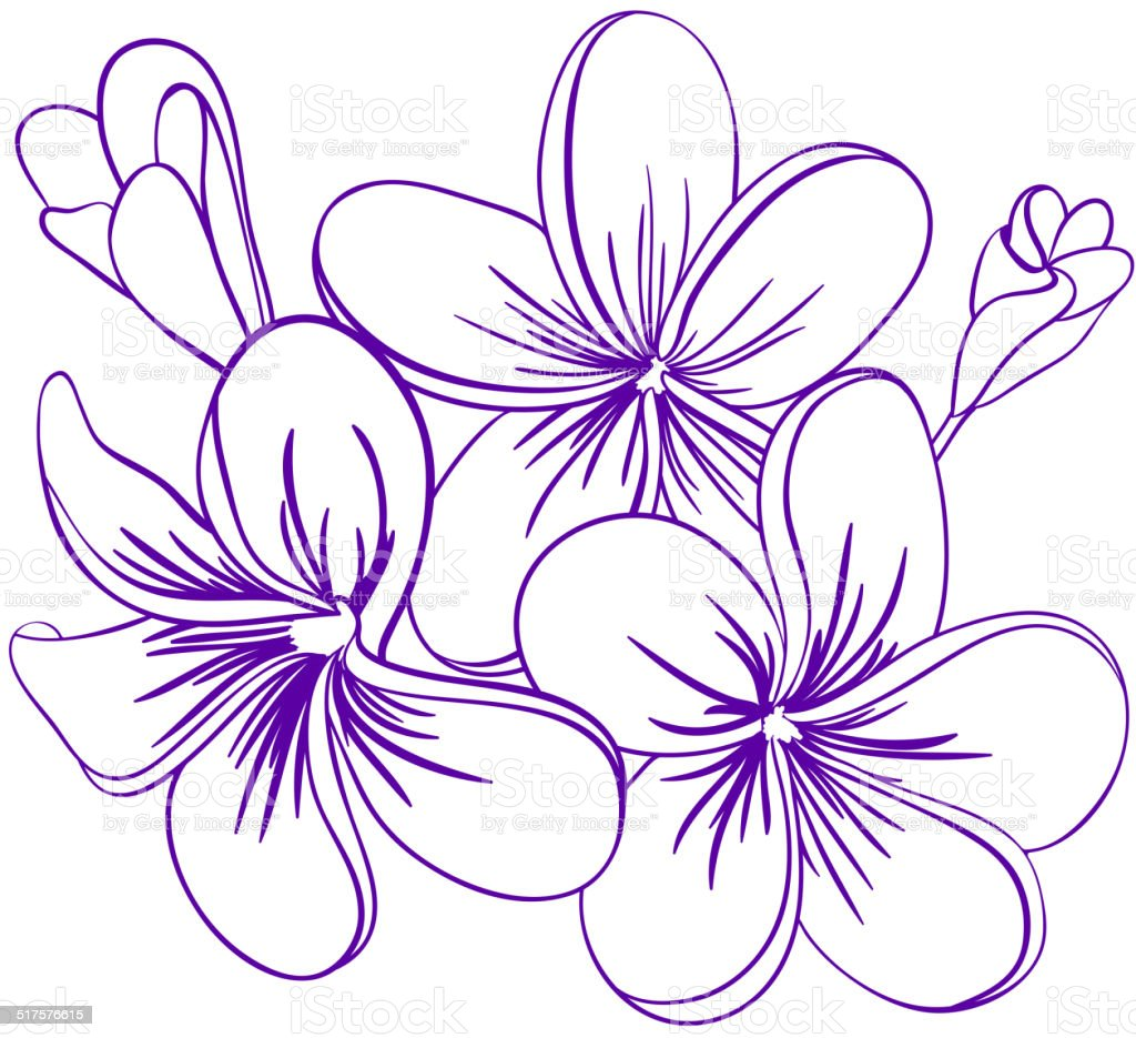 Beautiful hand drawn plumeria flowers stock vector art more images beautiful hand drawn plumeria flowers royalty free beautiful hand drawn plumeria flowers stock vector art mightylinksfo Image collections
