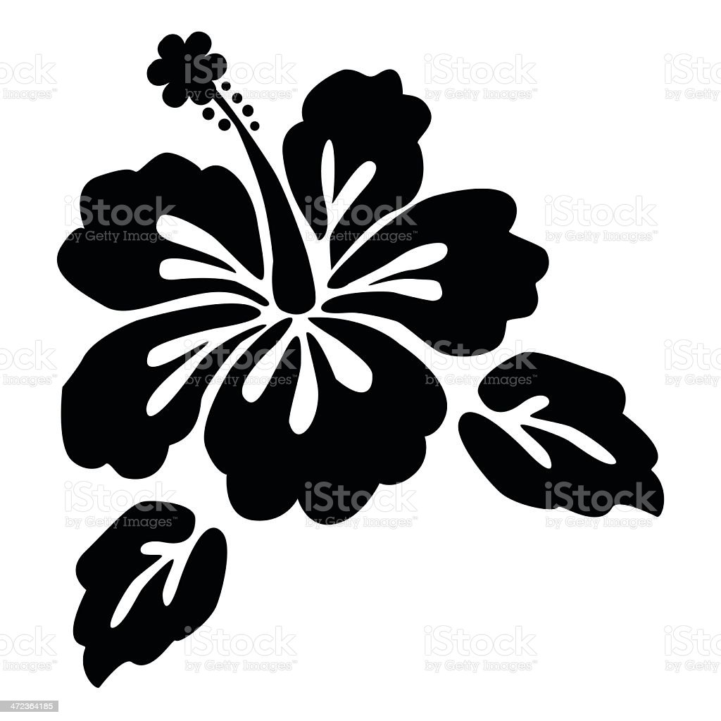 Beautiful Hibiscus Flower With White Background Stock Vector Art