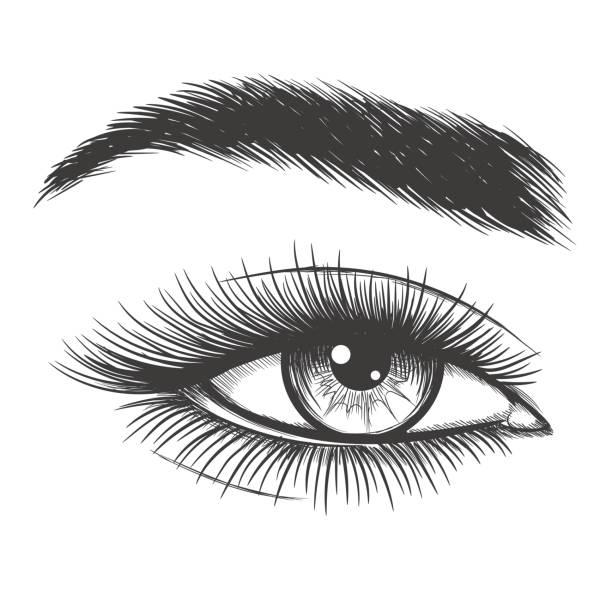美麗的女人眼睛素描 - 睫毛 幅插畫檔、美工圖案、卡通及圖標