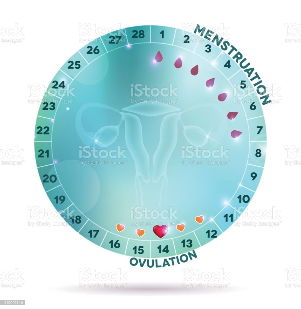 Beautiful light blue menstrual cycle graphic vector art illustration