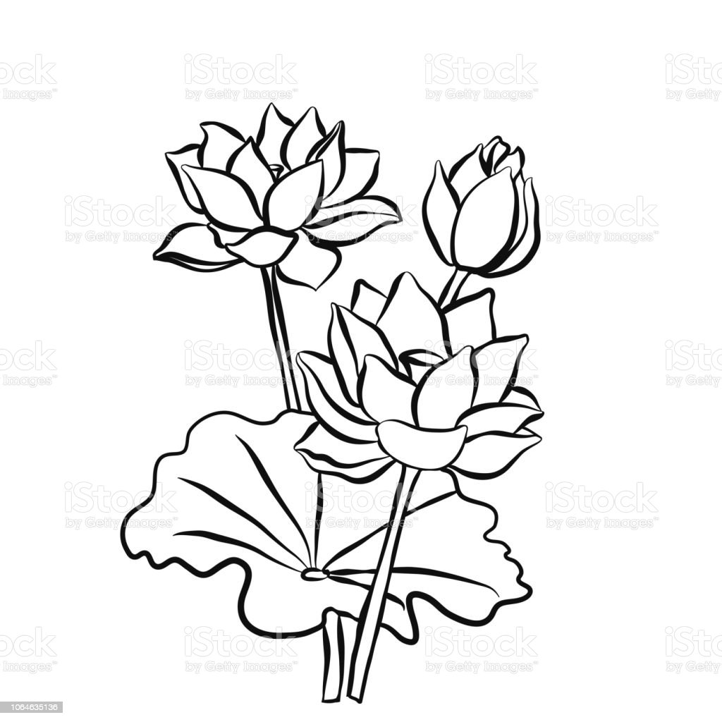 Beautiful Lotus Flowers Black White Isolated Sketch Stock Vector Art