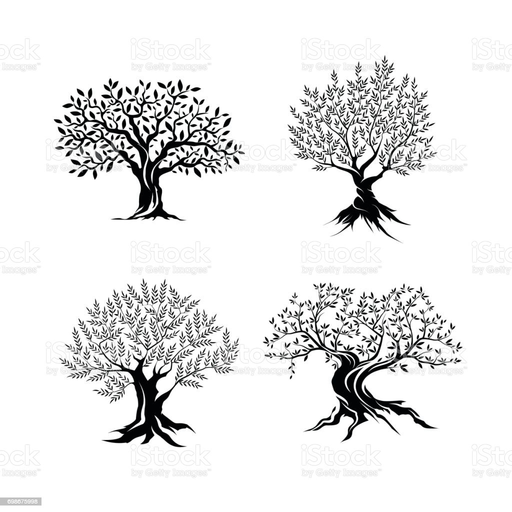Beautiful magnificent olive tree silhouette isolated on white background. vector art illustration