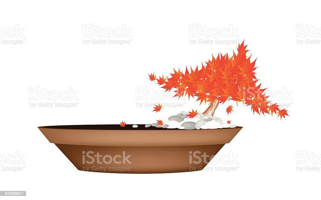 Beautiful Maple Bonsai in A Flower Pot vector art illustration