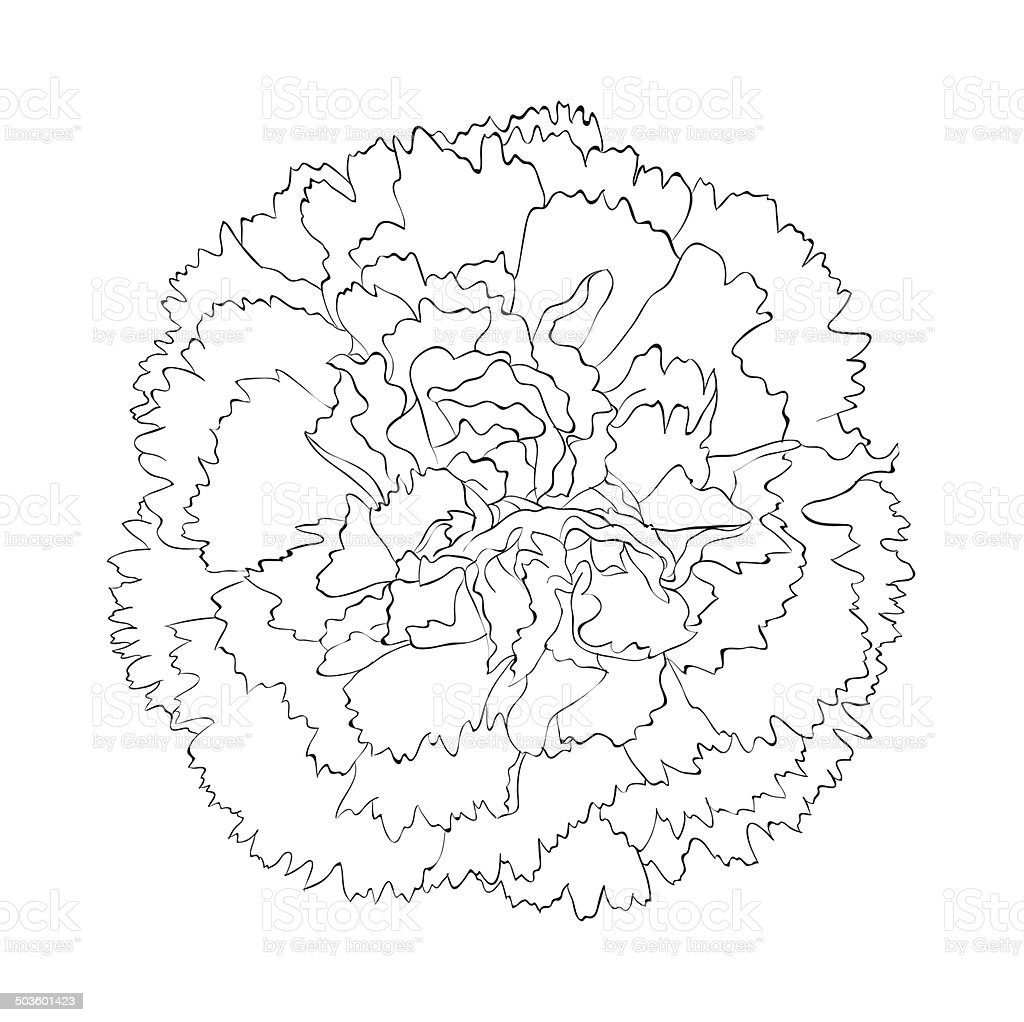 Beautiful Monochrome Black And White Carnation Flower ...