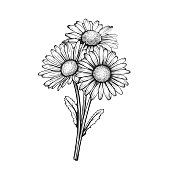istock beautiful monochrome, black and white daisy bouquet flowers isolated. for greeting cards and invitations of the wedding, birthday, Valentine's Day, mother's day and other seasonal holiday 1270074242