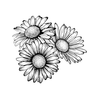 beautiful monochrome, black and white daisy bouquet flowers isolated. for greeting cards and invitations of the wedding, birthday, Valentine's Day, mother's day and other seasonal holiday