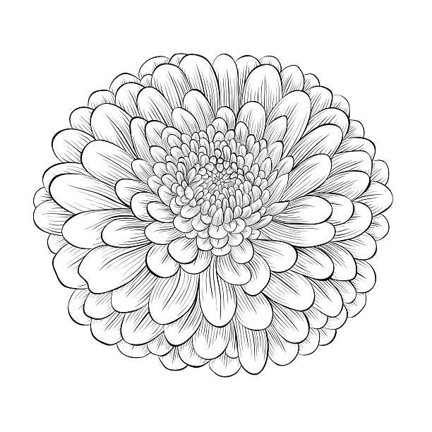 Royalty free clip art of daisy flower outline black clip art vector clip art of daisy flower outline black clip art vector images illustrations mightylinksfo