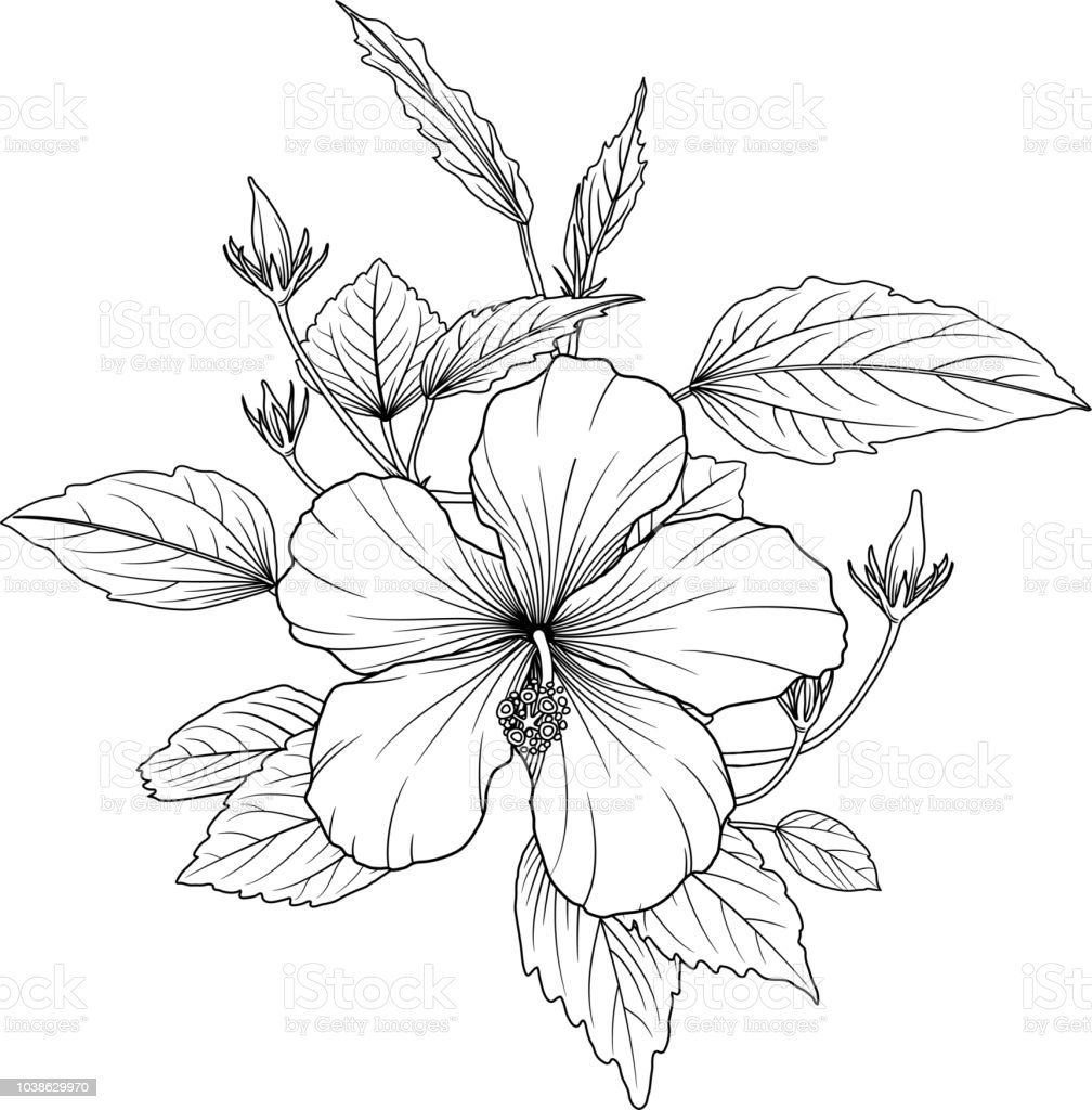 Beautiful Monochrome Black And White Flowers Isolated On Background
