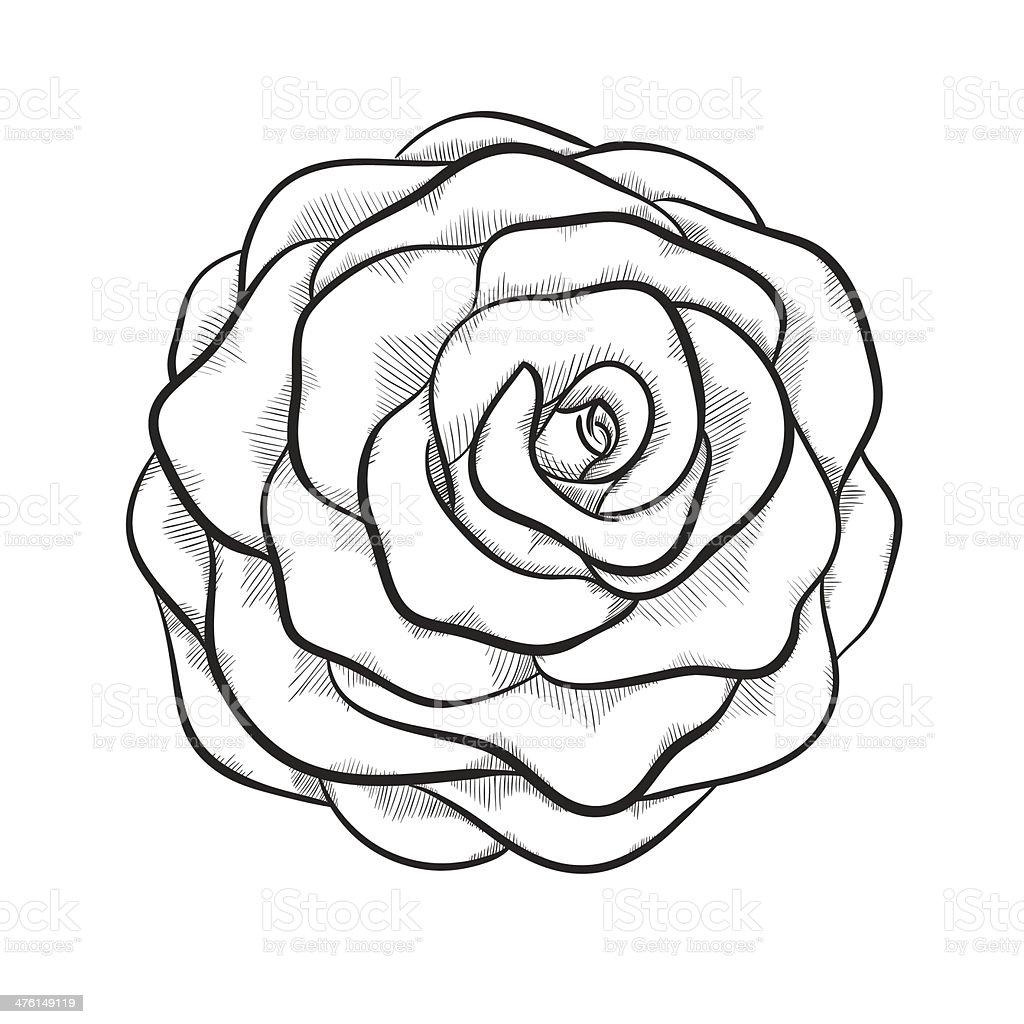 Bellissimo Monocromatico Bianco E Nero E Rosa Isolato Su Sfondo