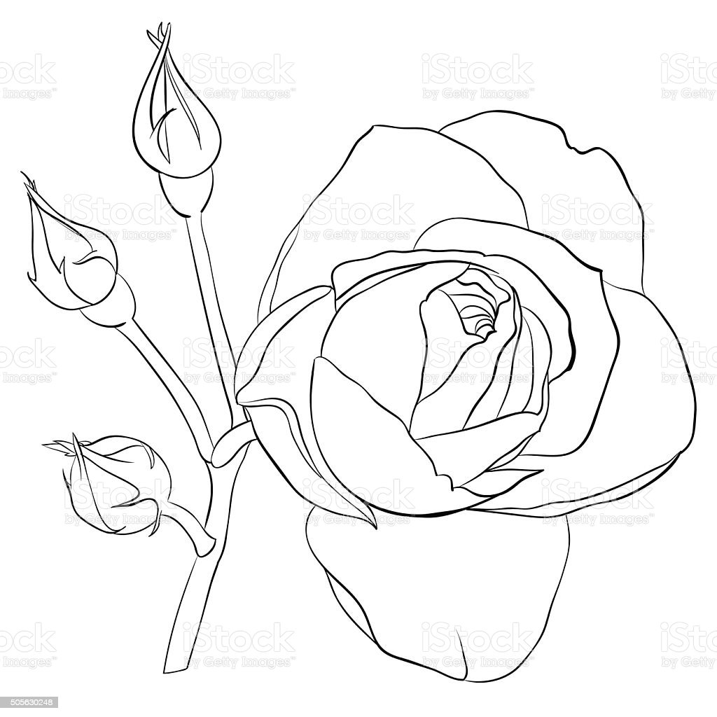 Beautiful monochrome black and white rose isolated vector art illustration
