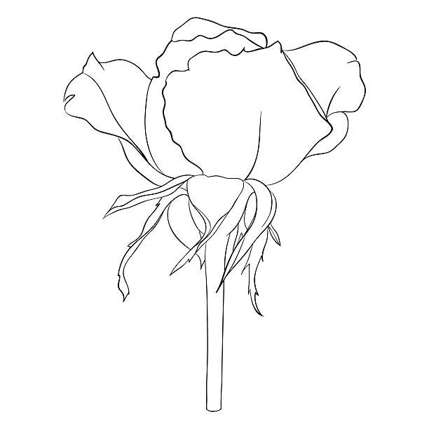 Best Rose Black And White Clipart Pictures Illustrations, Royalty-Free Vector Graphics & Clip ...