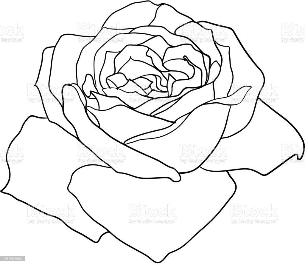 Beau Dessin Monochrome Noir Et Blanc Fleur Rose Isolé Vecteurs Libres De Droits Et Plus Dimages Vectorielles De Abstrait