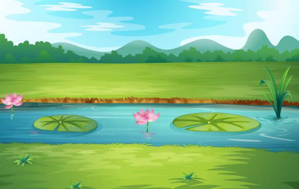schöne natur-flusslandschaft - seerosenteich stock-grafiken, -clipart, -cartoons und -symbole