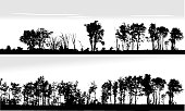 Panoramic Treeline in silhouette