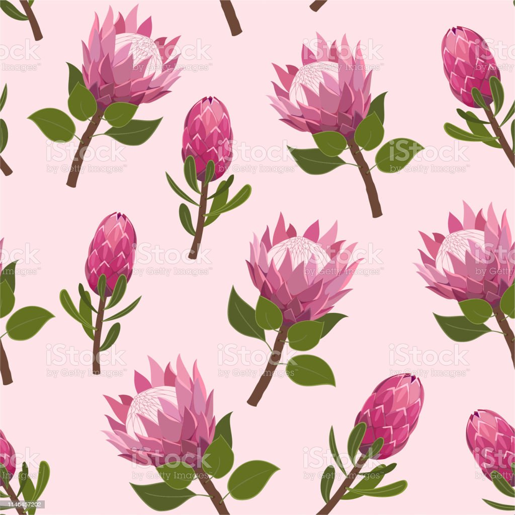 Beautiful pattern with exotic protea flowers. Trendy vector seamless texture.