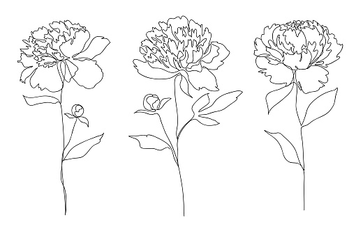 Beautiful peony flower set. Line art concept design. Continuous line drawing. Stylized flower symbol. Vector illustration