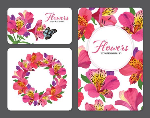 schöne rosa alstroemeria lilie blumen auf weißem hintergrundvorlage. - inkalilie stock-grafiken, -clipart, -cartoons und -symbole