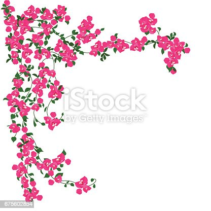 Beautiful curly pink flowers
