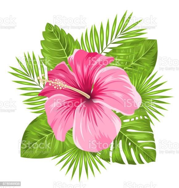 Beautiful pink hibiscus flowers blossom and tropical leaves vector id578589938?b=1&k=6&m=578589938&s=612x612&h=nts izacmq1b2ggy3 oofkf72moddyav7roy2izan4k=