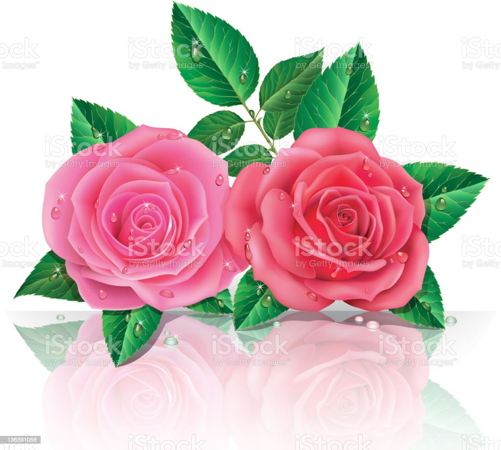 Schöne Rosa Rosen – Vektorgrafik