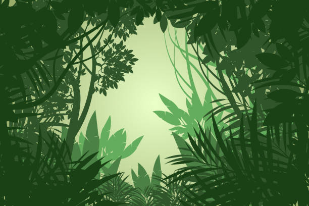 Beautiful rain forest scene Beautiful rain forest scene vector wallpaper nature backgrounds.Illustration is an eps10 file and digital illustration created without reference image tropical rainforest stock illustrations