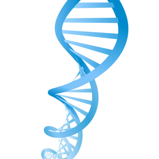 Beautiful realistic DNA blue colored double helix on white background. vector art illustration