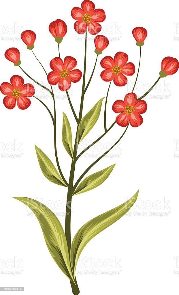 Beautiful red flowers isolated on white. royalty-free beautiful red flowers isolated on white stock vector art & more images of abstract