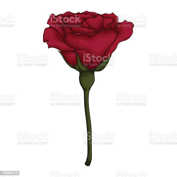 Beautiful red rose isolated on white background vector id506884230?b=1&k=6&m=506884230&s=612x612&h=bgx0vmr3c4bbyybo2ats3otki43pmjnexnbp5cao0j0=