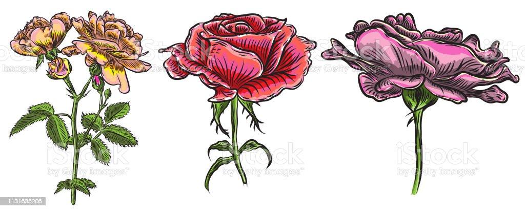 Ilustración De Hermosas Rosas Rojas Y Hojas De Tallos