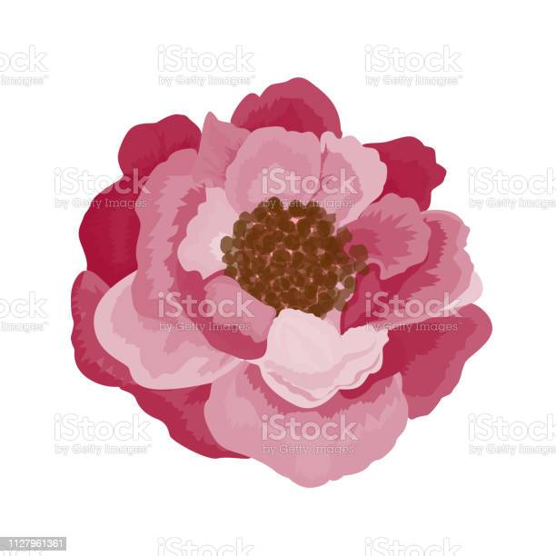 Beautiful rose flower isolated on white background vector id1127961361?b=1&k=6&m=1127961361&s=612x612&h=zak eztbldjenhqxx aa746gtqx96fzyr4tywsrzv5e=