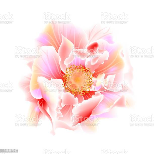 Beautiful rose flower isolated on white background vector id1148867537?b=1&k=6&m=1148867537&s=612x612&h=ev1ejut3dbjstvgvsai rgxjitqa3 qtb5bvszfbn c=