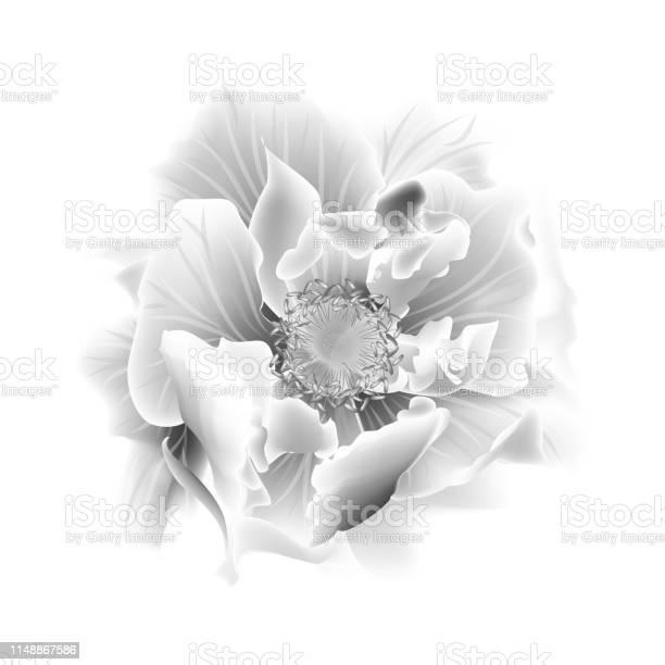 Beautiful rose flower isolated on white background vector id1148867586?b=1&k=6&m=1148867586&s=612x612&h=ob6army8waapbgmityjzxpkeec3fw5sg0le2fedheym=