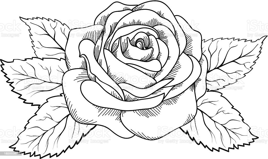 Beautiful rose in the style of black and white engraving stock beautiful rose in the style of black and white engraving royalty free beautiful rose mightylinksfo