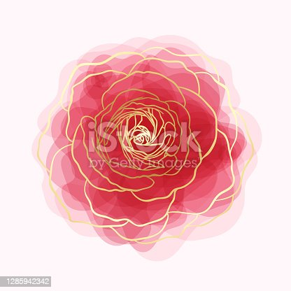 istock beautiful rose watercolor imitation hand-painted with golden outline isolated on white background 1285942342