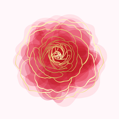 beautiful rose watercolor imitation hand-painted with golden outline isolated on white background.