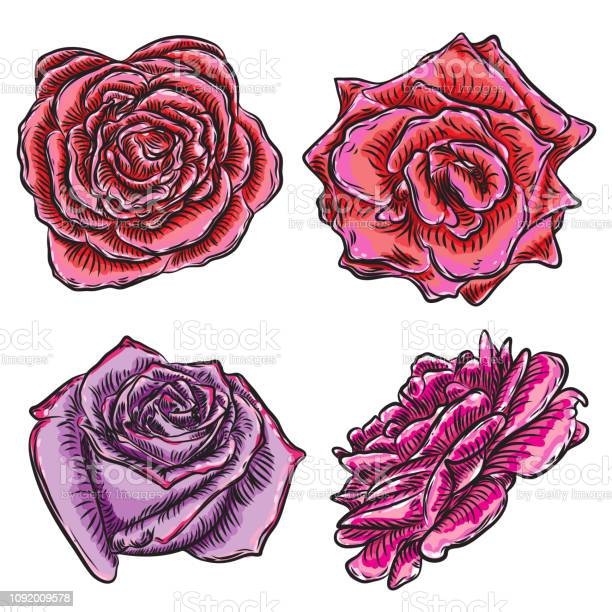Beautiful roses heads blooming set isolated on white background for vector id1092009578?b=1&k=6&m=1092009578&s=612x612&h=yfvmt9j9muyvmlyih7cjwhuzhxm400owqe oizci3si=