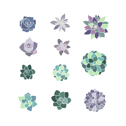 Beautiful set collection with green and lilac succulent cactus hand drawn top view for decoration design. Vector template. Isolated illustration.