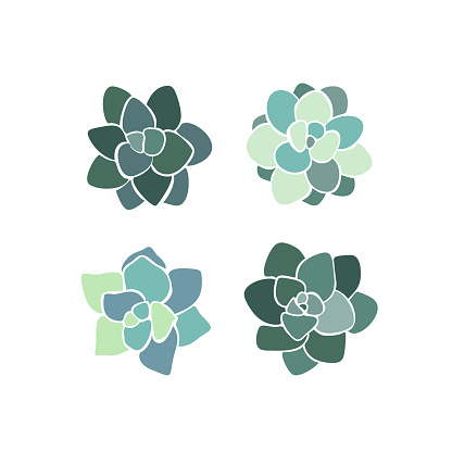Beautiful set collection with green and lilac succulent cactus hand drawn top view for decoration design. Vector template. Isolated illustration